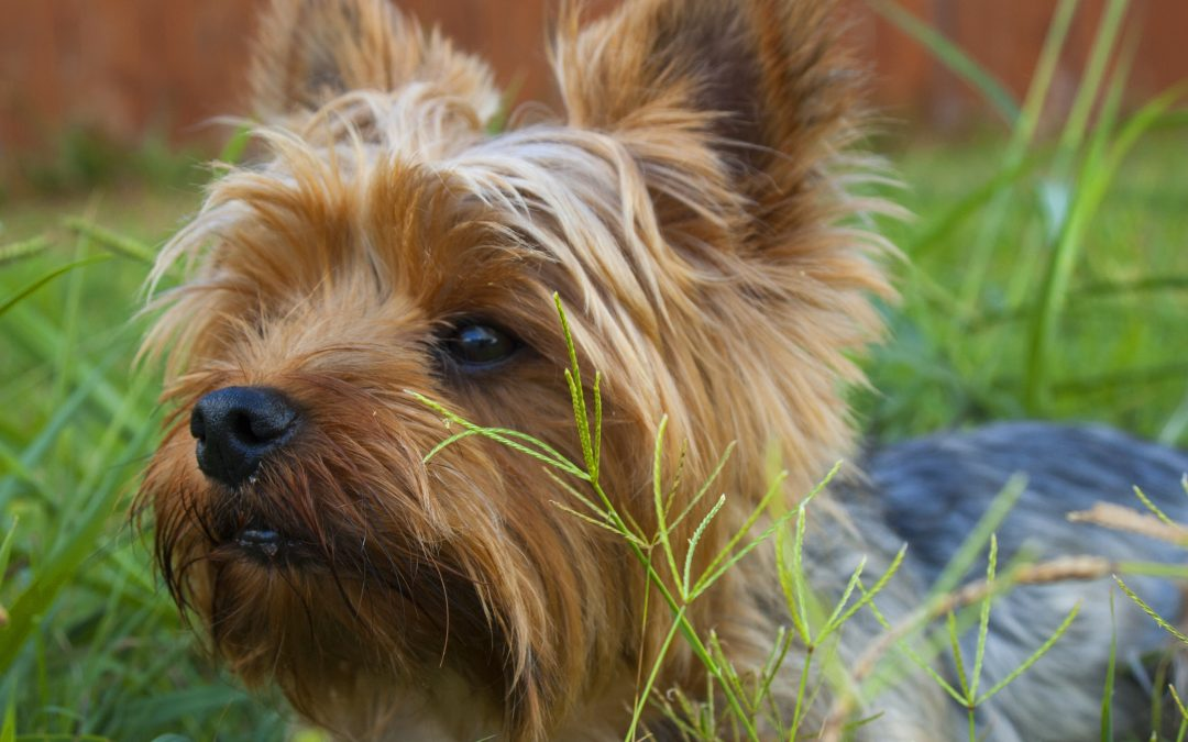 Compulsory Micro chipping for Dogs